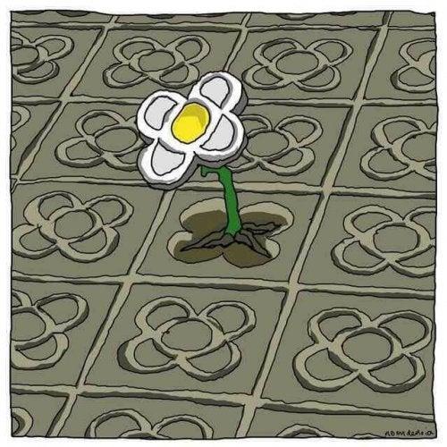 Eine Blume wächst durch Zement