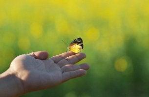 Lebenszyklen - Schmetterling auf ausgestreckter Hand
