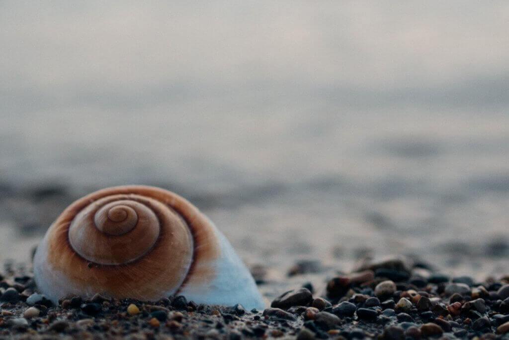 Schnecke am Meer