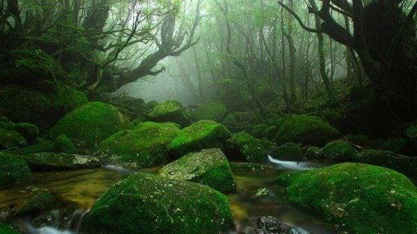 Ein Landschaftsbild zeigt einen dunkelgrünen Wald