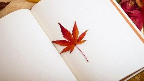 Ahornblatt in leerem Buch