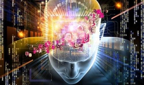 Das menschliche Gehirn, das Informationen verarbeitet