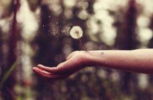 Eine Hand hält eine Pusteblume.