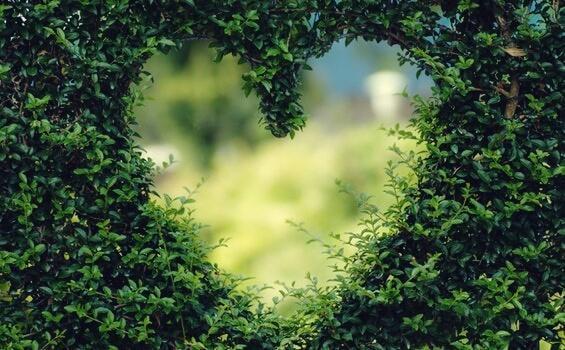Loch in Herzform in einem Busch