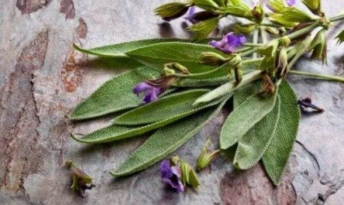 Vorteile von Salbei, der Pflanze für Frauen