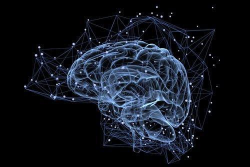 Eine dreidimensionale Darstellung des menschlichen Gehirns