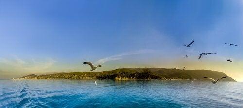 Möwen fliegen über eine Insel