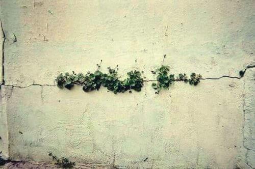 Pflanzen wachsen aus einem Spalt in einer Mauer.
