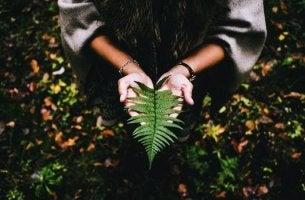 Sinn des Lebens finden - Farnblatt in den Händen eines Menschen