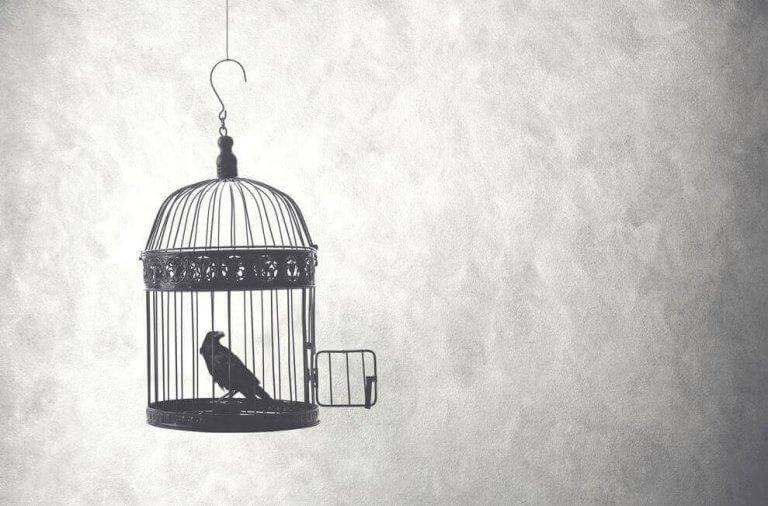 Vogel sitzt in einem Käfig