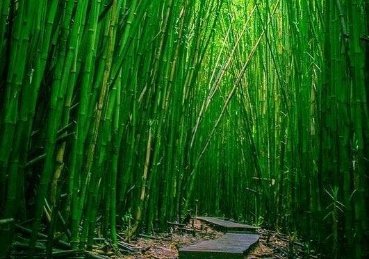 Weg in einem Bambuswald