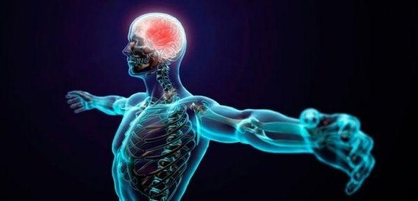 Eine Animation zeigt den menschlichen Körper durchsichtig mit einem leuchtenden Gehirn.