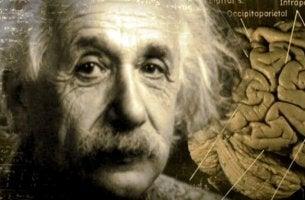 Albert Einstein mit einem Gehirn