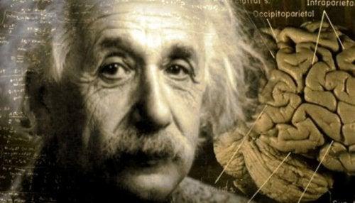 Die unglaubliche Geschichte von Albert Einsteins Gehirn
