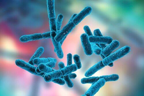 Bakterien als Symbol für den Zusammenhang zwischen Fibromyalgie und Probiotika