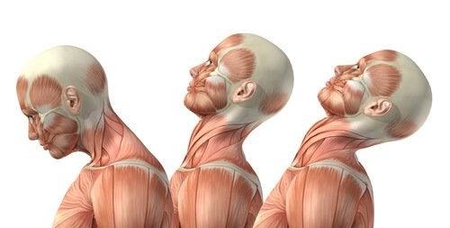 Übung zur Schonung des Nackens