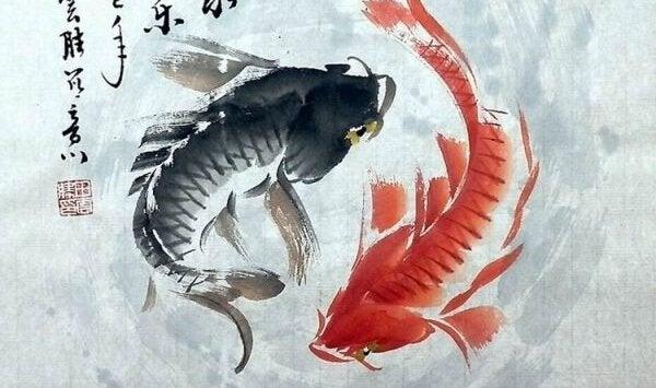 Ein roter und ein schwarzer Fisch