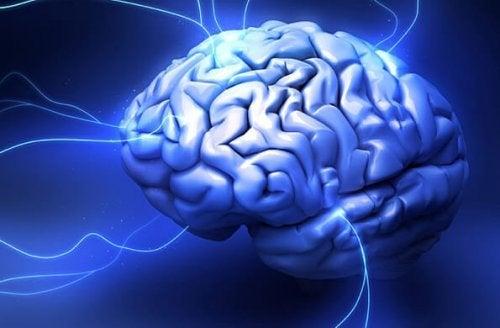 Das menschliche Gehirn ist verantwortlich für komplexe Entscheidungen, die wir tagtäglich treffen.