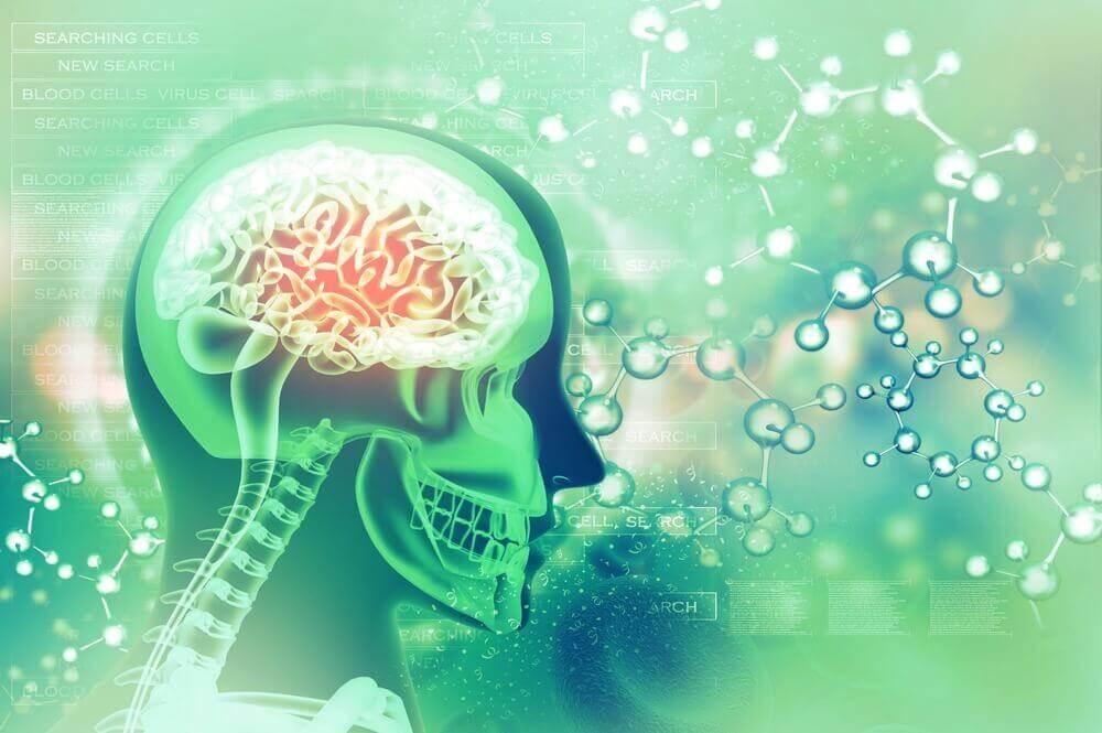 Grüne Darstellung des menschlichen Gehirns