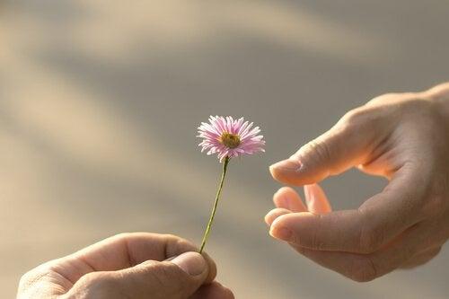 Hand reicht eine Blume als Zeichen für Vergebung