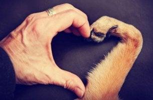 Hand und Pfote bilden ein Herz