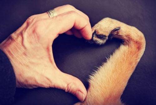 Eine Hundepfote und eine menschliche Hand bilden zusammen ein symbolisches Herz.