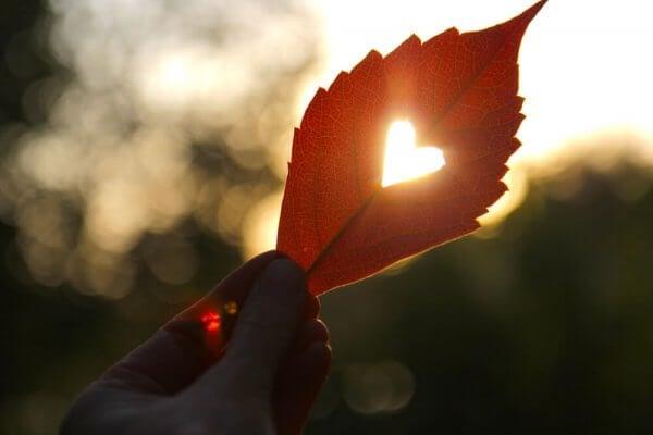 Ein Blatt wird gegen das Licht gehalten und lässt ein eingeschnittenes Herz erleuchten