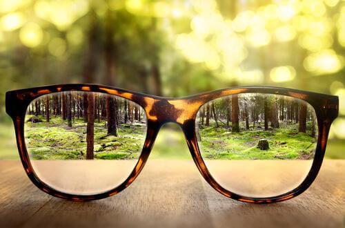Durch eine Brille einen klaren Blick auf den Wald bekommen
