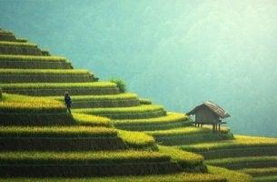 Ein Mensch in einer Reisfeldterrasse