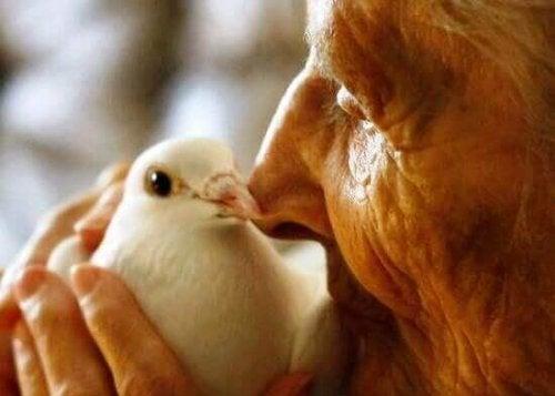 Alter Mensch mit Taube