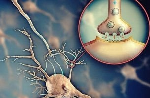 Neuron und Synapse