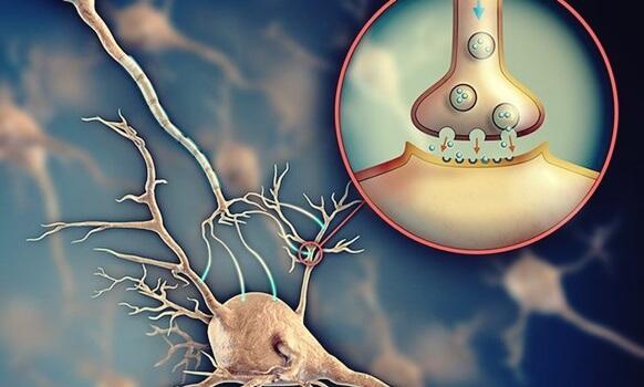 Acetylcholin: der Neurotransmitter, der die Kommunikation zwischen den Neuronen ermöglicht