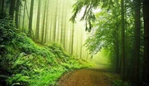 Pfad durch Laubwald