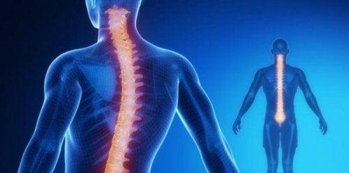 Rückenmark und Wirbelsäule