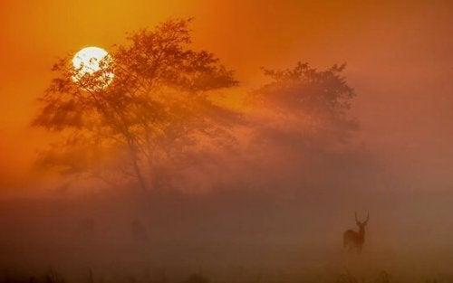Sonnenuntergang in afrikanischer Landschaft