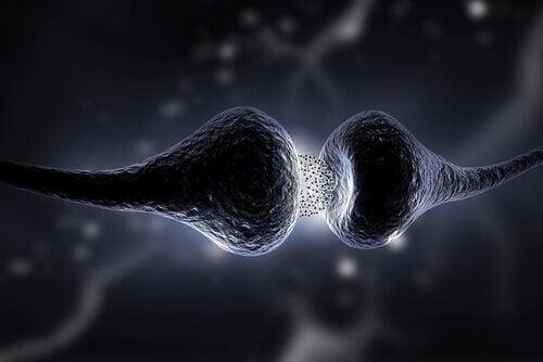 Eine Synapse als Verbindung im Gehirn