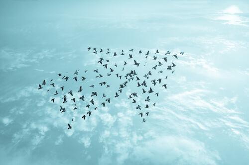 Vögel, die einen Pfeil formen