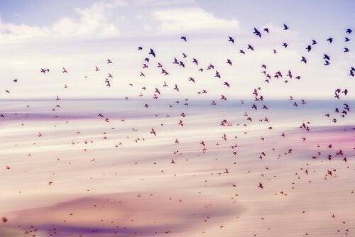 Ein Vogelschwarm über Meer und Wolken