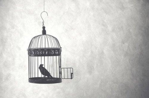 Ein Vogel im Käfig