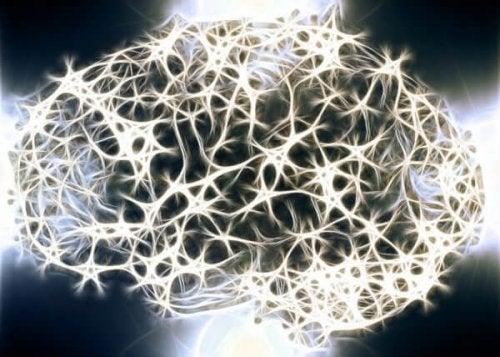 Weißt du, warum die weiße Substanz in unserem Nervensystem so wichtig ist?