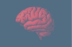 Das menschliche Gehirn ist von Alterung nicht ausgenommen.