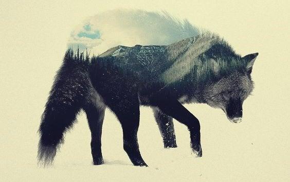 Wolf verschwimmt mit Landschaft