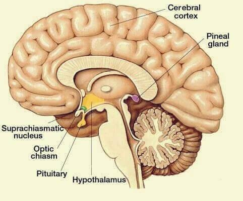 Übersicht der wichtigsten Gehirnareale