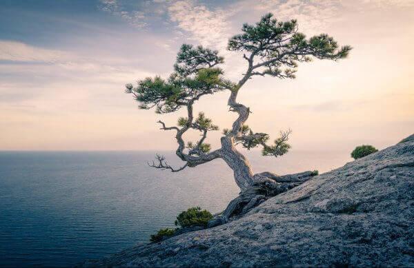 Ein Baum wächst am Fels und im Hintergrund geht die Sonne unter.