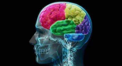 Das süchtige Gehirn: wie Sucht funktioniert