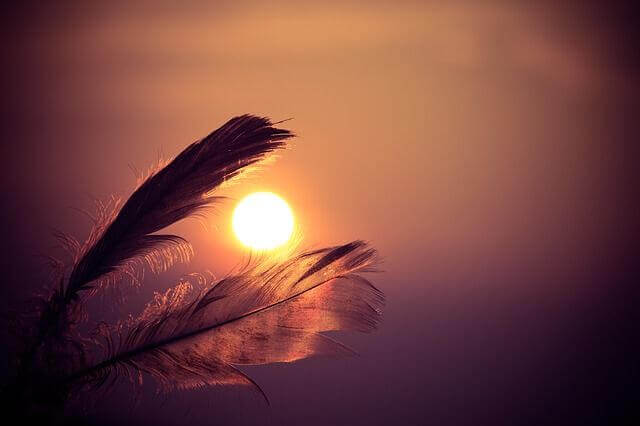 Federn vor dem Sonnenuntergang