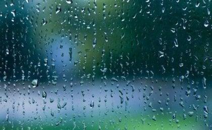 Der Klang des Regens: Eine Melodie der Ruhe für unser Gehirn