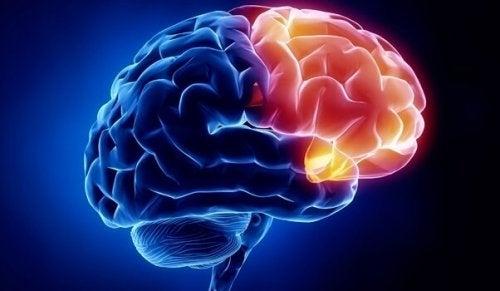 Orbitofrontaler Kortex