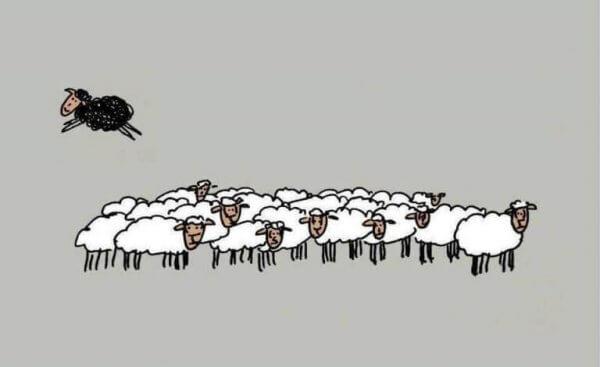 Wer nicht mit der Gruppe läuft, ist ein schwarzes Schaf.