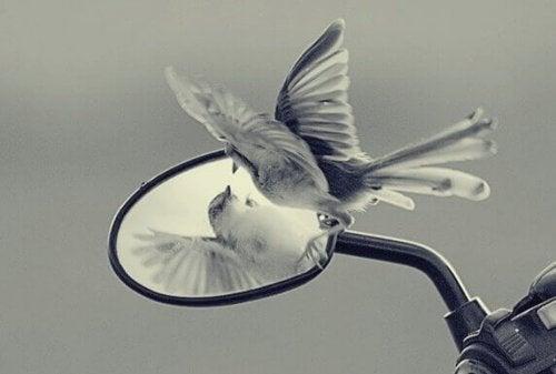 Vogel schaut in einen Spiegel